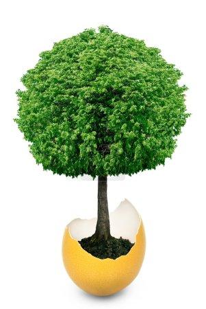 Baum, der aus der Eierschale wächst, ist isoliert auf weißem Hintergrund.