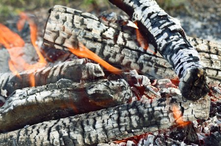 Charred wood burning down in the fire glow, close-up