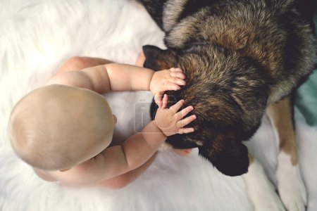 Overhead view of a 6 month old baby petting her re...