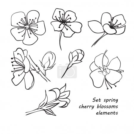 Illustration for Set of spring cherry blossom flowers. Hand drawing. Black and white. Vector illustration - Royalty Free Image
