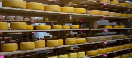 Cheese refining on shelves