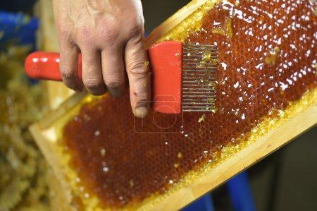 Photo pour Apiculteur femelle en atelier grattant le cadre en nid d'abeille - image libre de droit
