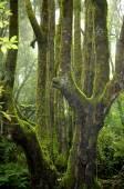Rainforest on La Gomera