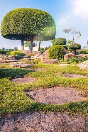 Photo pour Jardin japonais pittoresque Jardin japonais chinois dcoration topiaire forme arbuste. - image libre de droit