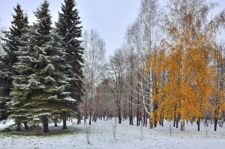 First snowfall in city park - meeting the fall and winter