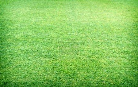 fresh spring green grass, green grass texture or background