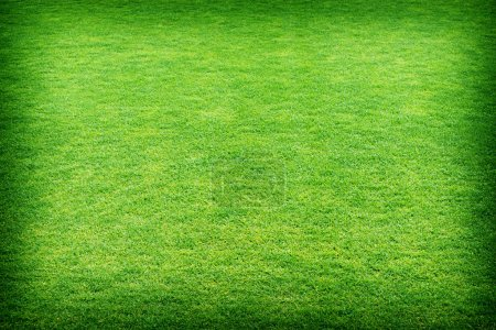 fresh spring green grass texture or background.