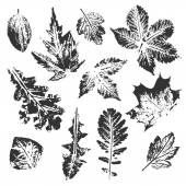 Collection of black leaves imprints on white background