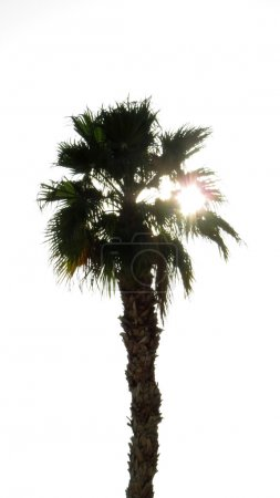 Silhouette of palm tree at sunrise