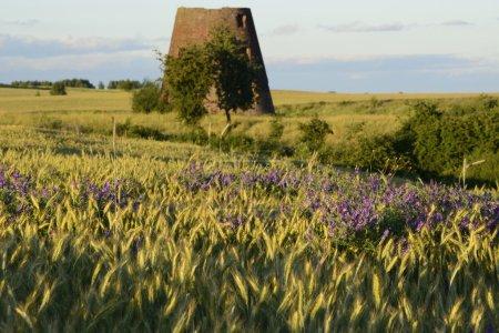 alte Windmühle auf dem Feld