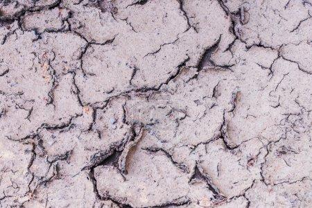 Cracked soil.