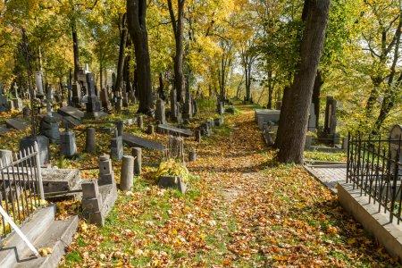 crosses in autumn