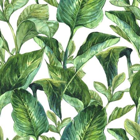 Foto de Acuarela transparente fondo exótico con hojas tropicales, Ilustración de botánico - Imagen libre de derechos