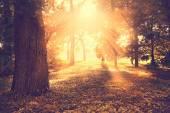 Krásný podzimní park