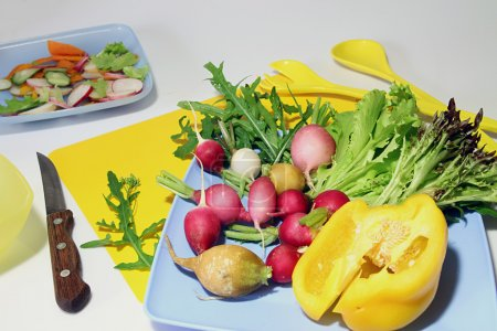 Vegetable for salad: radish, lettuce, arugula, paprika