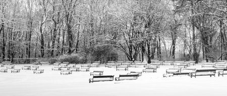 Photo pour Parc en hiver, noir et blanc - image libre de droit