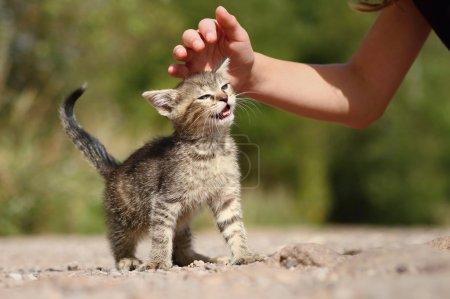 Kitty fondling