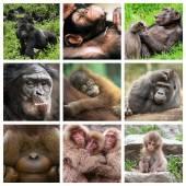 Koláž opice
