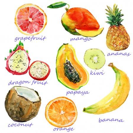 Photo pour Fruits aquarelles. Peinture à la main mis sur papier. isolé sur fond blanc - image libre de droit