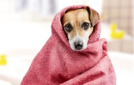 Bath washed dog