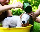 Děti umýt zbloudilé bílé štěně v žlutém povodí na letní zahradní pozadí