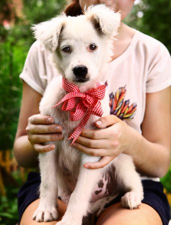 White puppy with neck bow close up portrait
