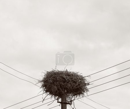 One stork in the nest in summer day, storks nest and family, stork mother in the nest, stork nest, migration, birds migration, huge nest, sepia photo, baby bird, vintage photo, family concept