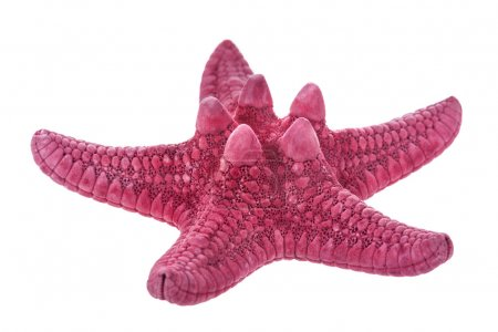 Red starfish on a white