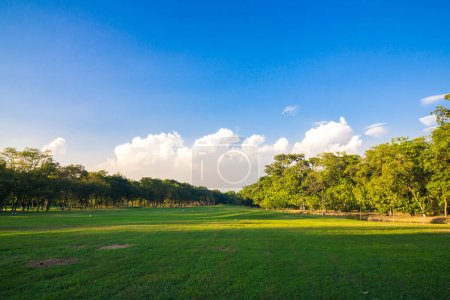 Photo for Green public park sunset light sky with tree and meadow - Royalty Free Image