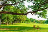 červené kolo na zelené trávě