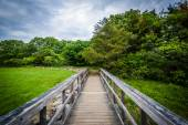 Boardwalk trail at Odiorne Point State Park, in Rye, New Hampshi