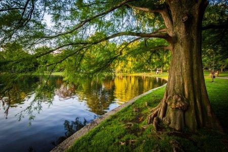 Tree along the lake at