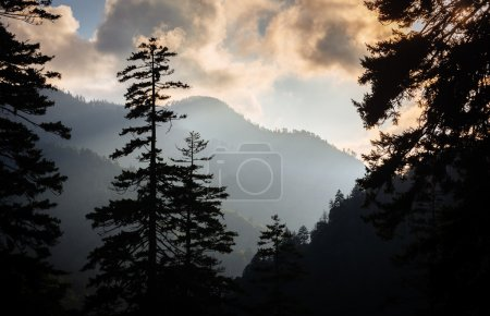 Evening view through pine trees from an overlook on Newfound Gap