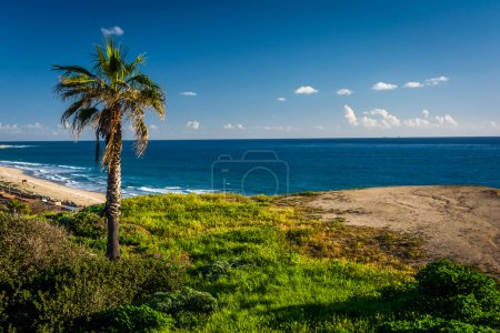 Palm tree on a cliff over the Pacific Ocean in San Clemente, Cal