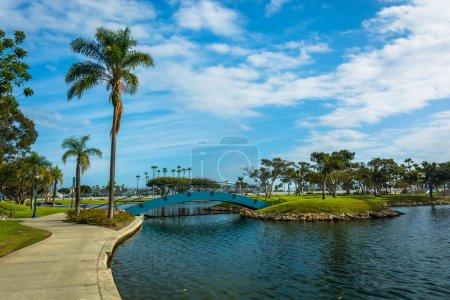 Palm tree and bridge at Rainbow Lagoon Park in Long Beach, Calif