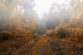 beautiful autumn forest  on misty morning