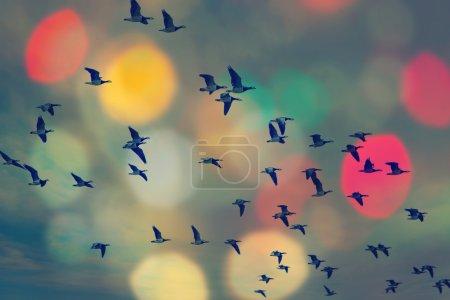 Photo pour Oiseaux volant et ciel abstrait, fond printanier abstrait fond heureux, concept d'oiseaux de liberté, symbole de liberté et de liberté - image libre de droit