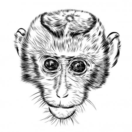 Sketch monkey face. Hand drawn doodle vector illustration.