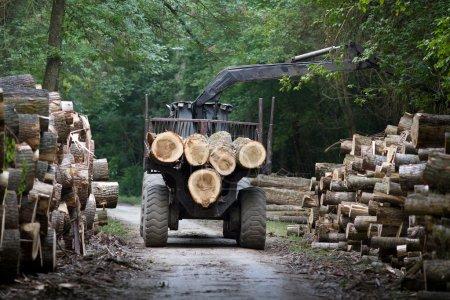 Photo pour Tracteur de chargement des coffres en bois sur remorque en forêt - image libre de droit