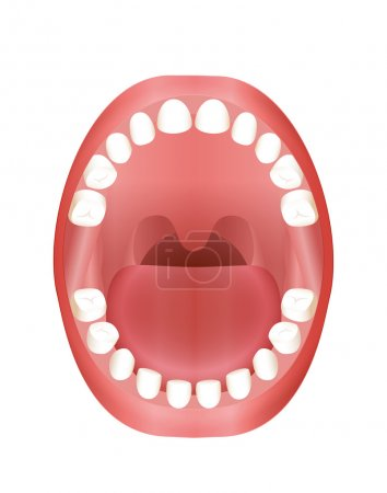 Baby Teeth Teething Children Mouth