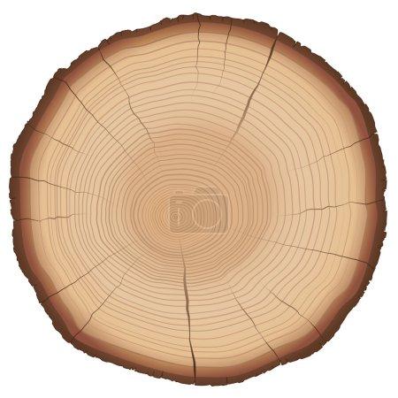 Illustration pour Illustration des anneaux annuels sur une tranche de bois. Vecteur isolé sur fond blanc . - image libre de droit