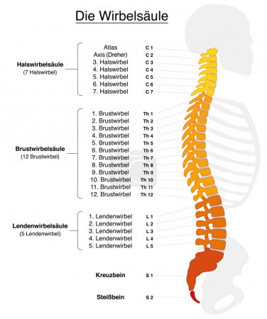 Spine German Labeling