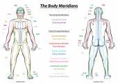 Meridian System Description Chart Male Body