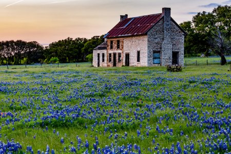 Abandoned Old House in Texas Wildflowers.