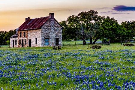 Casa vieja abandonada en Texas Flores silvestres al atardecer .