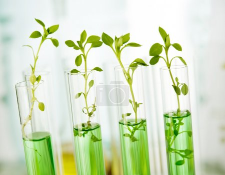 Laboratory analysis of plant