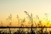 meadow grass at sunset