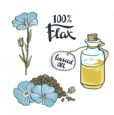 Illustration for Flax Seeds and flowers and oil. Vector Illustration - Royalty Free Image