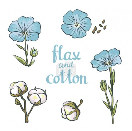 Illustration for Flax Seeds and flowers. Vector Illustration - Royalty Free Image