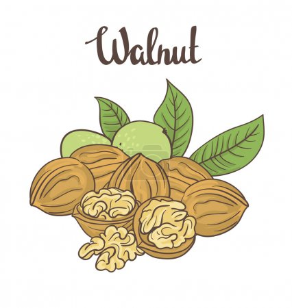 Cartoon walnuts with leaves